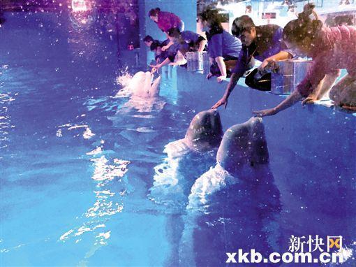 正佳广场圈养海洋生物惹争议 网帖指海洋馆虐待动物 - 新浪广东