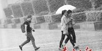 图为5日深圳罗湖区街头,大雨缓解了闷热。南方日报记者 朱洪波 摄 - 新浪广东