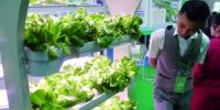 3000种农产品亮相农博会 好看好买 - 广东大洋网