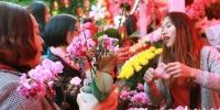 广州花市11花市成交金额达1.21亿 共迎客508万人次 - 新浪广东