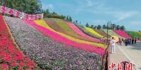 在福建漳州长泰县的十里蓝山景区,520米长的彩虹花海,种着三色堇、薰衣草、鼠尾草、金鱼草等十余中常见草花,不同种类、不同颜色的草花错落分布,吸引着游客驻足。 闫旭 摄 - 新浪广东