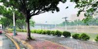 废旧单车清走了 人行道畅通了 - 广东大洋网