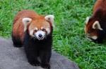 """野生动物误闯进家中怎么办?广州""""保护野生动物宣传月""""启动 - 广东大洋网"""