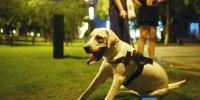 与你息息相关!《东莞市养犬管理条例》纳入2019年地方性法规立法计划建议 - News.Timedg.Com