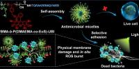 图1.靶向型高分子抗生素抑杀高致病菌的协同机制 - 华南师范大学