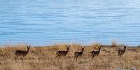 西藏:冬日羊湖 动物乐园 - News.21cn.Com