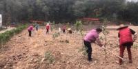 广州白云发起绿化造林,首批栽种2400株优质树苗 - 广东大洋网
