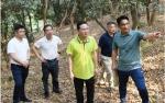 清溪镇领导率队督导检查清明期间森林防灭火工作 - News.Timedg.Com