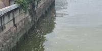 珠江岸边出现大量死鱼?或与强对流天气有关 - 广东大洋网